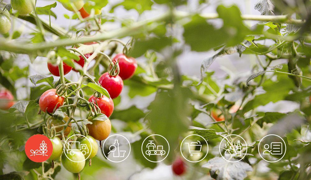 可持续的农业种植